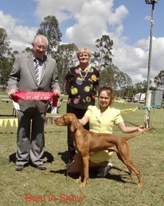 Andras Best in Show