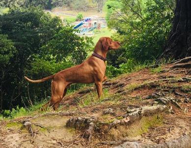 Bruno (Seek Ruahines of Sierraskye)